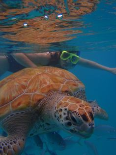 Bridgetown, Bridgetown, Barbados - Did a day trip with Calabazas Sailing Catamaran out of Bridgetown to snorkel with the turtles. Beautiful sail, wonderful day.
