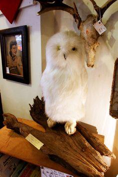 Vintage Taxidermy Fur Owl Gaffe by mammothcurios on Etsy, $275.00