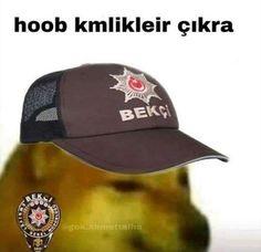 Doge Meme, Im Depressed, My Teddy Bear, Profile Photo, Green Day, Mellow Yellow, Animal Memes, Bff, Little Girls
