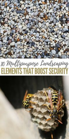 10 Multipurpose Landscaping Elements That Boost Security - you're going to plant edibles and homeopathic remedies rather than just fostering a pretty lawn for football.