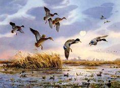 Waterfowl Paintings by Jim Killen 11