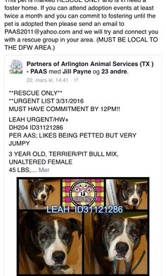 3/31/16 MEGA URGENT!! PLEASE SHARE!! RESCUE ONLY!! PLEASE FOSTER!! https://m.facebook.com/PAAStx/photos/a.425018764201524.87114.234124973290905/990857227617672/?type=3&refid=17&_ft_=top_level_post_id.998787320157996%3Atl_objid.998787320157996&__tn__=%2As