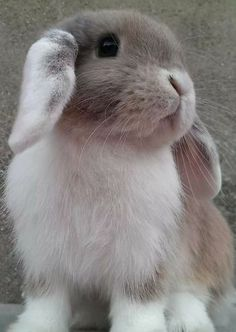 This is Stefan Salvatore guys 😂😂😂 Cute Baby Bunnies, Funny Bunnies, Cute Babies, Beautiful Rabbit, Fluffy Bunny, Cute Little Animals, Cute Animal Pictures, Animals Beautiful, Animals And Pets