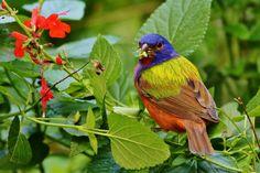 Peacock Butterfly, Birds, Animals, Animales, Animaux, Bird, Animal, Animais