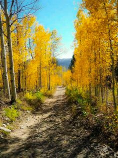 Dirt road in the fall (Idaho) by Gina P.