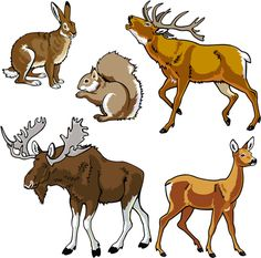 vector set of wild animals design graphic