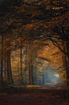 Beautiful tunnel of Autumn leaves just wrapping themselves around u. oooo is so safe in this tunnel. e.