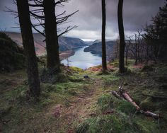These trees perfectly framed the view of Thirlmere & its fells Lake District England [OC] [45093607] #reddit