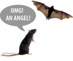 LOL-now I realize the irony of me hating bats b/c they're scary and basically rats/mice with wings.but I love rats/mice. Funny Images, Funny Photos, Funniest Pictures, Hilarious Pictures, Amazing Pictures, Bing Images, Just For Gags, Funny Animals, Cute Animals