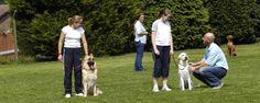 Obedience class at Royvon Merthyr