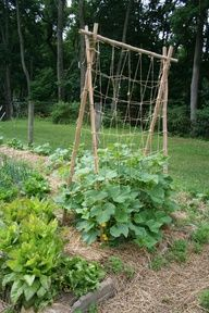 homemade trellis for cukes using bamboo and jute heres another one. I can just use the red bamboo poles I have and my jute string