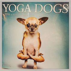 I want a Yoga Dog
