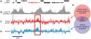 Alcohol-Induced Histone Acetylation Reveals a Gene Network Involved in Alcohol Tolerance