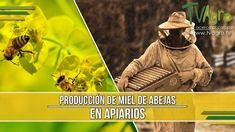Producción de Miel de Abejas en Apiarios - TvAgro por Juan Gonzalo Angel