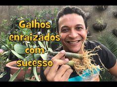 Sucesso no Enraizamento de Galhos de Rosas do Deserto - YouTube Bonsai, Mascara, Cap, Youtube, Desert Trees, Climbing Roses, Tree Planting, Tree Branches, Dressmaking