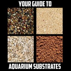 Learn all about Aquarium Substrates and which ones you should use in your tank!