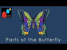 Parts of the Butterfly - Montessori Zoology Nomenclature