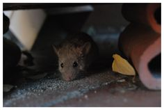 (6) the mouse