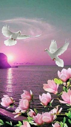 Peaceful doves in pink Canvas Print - Canvas Wall Decor Beautiful Nature Wallpaper, Beautiful Moon, Beautiful Paintings, Beautiful Birds, Beautiful Landscapes, Dove Images, Flowers Gif, Beautiful Waterfalls, Fantasy Landscape