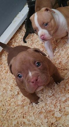 People are the ones who make them dangerous. I love pit bulls!