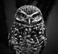 selective focus grayscale photography of owl check our store for more products inspired on owls Owl Photos, Owl Pictures, Amazing Beasts, Owl Facts, Bird Statues, Animal Posters, Photo Series, Animals Images, Wildlife Photography