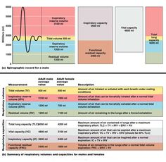 pulmonary function tests | Pulmonary function tests evaluate losses in respiratory function using ...