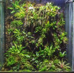 Image result for vivarium