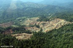 Rainforest clearing for palm oil production in Borneo in 2012. Photo by Rhett A. Butler