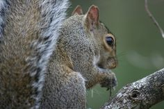"""Notch"" the Squirrel - his Mom's yard - Mobile, AL"