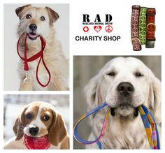 RAD Animal Welfare Collar collection for Township dogs Address: Shop 11 Astoria Village Hermanus Tel: 073 354 4915 Email: loveisrescue@gmail.com