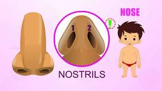 Nose - Human Body Parts - Pre School - Animated Videos For Kids