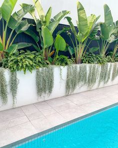 Oh it's the weekend, the weather is going to be great! Enjoy your pools and landscapes! Tropical Pool Landscaping, Backyard Pool Designs, Backyard Garden Design, Swimming Pools Backyard, Outdoor Landscaping, Small Backyard Pools, Pool Plants, Outdoor Plants, Outdoor Gardens