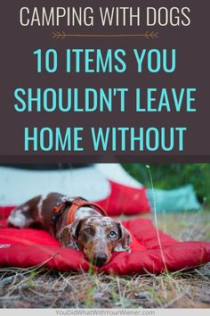 I've been camping with my dogs for years. I've gone through a lot of trial and error and have decided that there are 10 things I won't leave home without. Are all of these things on your favorite dog camping gear list? Camping Glamping, Camping Tips, Packing List For Travel, Travel Tips, Dog Friendly Hotels, Camping Supplies, Dog Travel, Dachshund Dog, Dog Friends