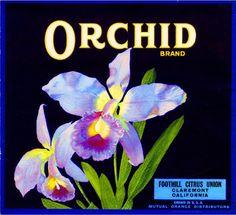 Claremont Los Angeles County Orchid Flower Orange Citrus Fruit Crate Box Label Art Print. $9.99, via Etsy.