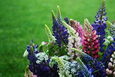 Spring Bouquet, Bouquets, Plants, Bouquet, Flora, Plant, Nosegay, Planting