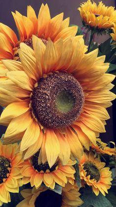 Sunflower Garden, Sunflower Art, Sunflower Tattoos, Flowery Wallpaper, Sunflower Wallpaper, Sunflowers And Daisies, Fall Flowers, Beautiful Flowers Garden, Pretty Flowers