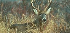 Every year, buck season approaches with the heavy anticipation of many archers and crossbow hunter dying to bag a nice buck.