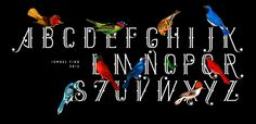 Fonts - Mexique by Ismael Fino - HypeForType Font Shop