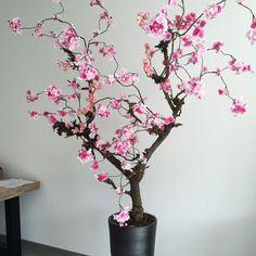 https://i.pinimg.com/236x/41/74/fb/4174fb5fbe1843ff2650b90ac4407574--bunga.jpg