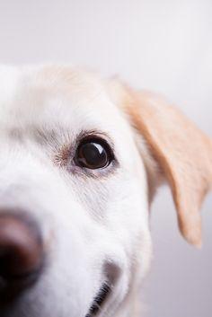 West Yorkshire Dog Portraits