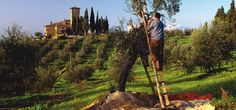 Tuscany Walking Tours plus Culinary and Family Tours by Classic Journeys, the Experts in Small-Group Cultural Travel