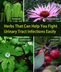 Stomach Problems, Urinary Tract Infection, Healing Herbs, Healthy Living, Medium Blog, Canning, Nature, Plants, Naturaleza
