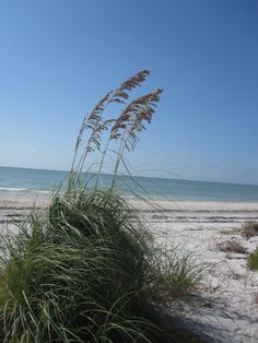 Sanibel Island - can't wait to get to my happy place tomorrow!