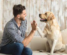 Training Collar, Training Your Dog, Professional Dog Training, Static Shock, Dog Shock Collar, Collar Designs, Dog Behavior, Large Dogs, Your Pet