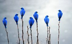 "myvikime: ""#source:timeline photography # #bluebirdsofhappiness# """