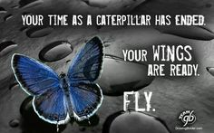 Your time a caterpillar has ended.