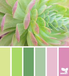 succulent spring color palette from Design Seeds Color Scheme Design, Colour Pallette, Color Palate, Colour Schemes, Color Combos, Color Patterns, Bright Color Palettes, Design Seeds, Pantone