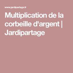 Multiplication de la corbeille d'argent | Jardipartage