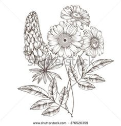 458 Best Drawing Flowers Images In 2019 Flower Designs Drawing