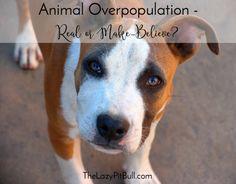 Animal Overpopulatio